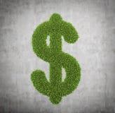 Green grass dollar Stock Images
