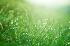 Green grass with drops Stock Photography
