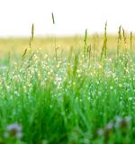 Green grass with drops of dew Stock Photos