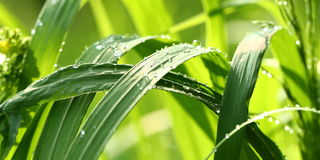 Green grass with drops Royalty Free Stock Photography