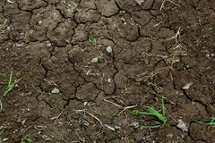 Green Grass on Dry Brown Soil Stock Photography