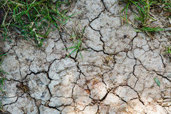 Green grass on dry cracked soil Royalty Free Stock Photography