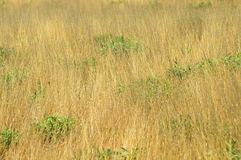 Green grass and dry grass Royalty Free Stock Image