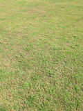 Green grass and dry grass. Background Stock Photo