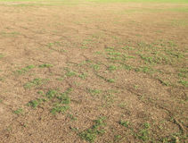 Green grass and dry grass Royalty Free Stock Photo