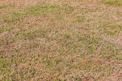 Green grass and dry grass. Royalty Free Stock Images