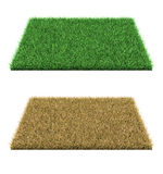 Green grass and dry grass. Stock Photo