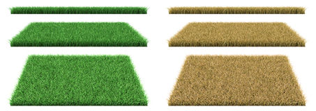 Green grass and dry grass. Royalty Free Stock Photography