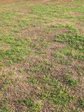 Green grass and dry grass with the morning light Royalty Free Stock Photos