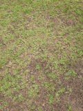 Green grass and dry grass. Texture Royalty Free Stock Photos