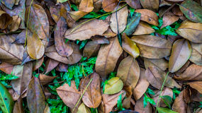 Green grass between dry leaves on the ground Royalty Free Stock Photos