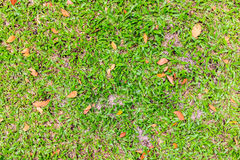 Green grass and dry leaves on ground Royalty Free Stock Image