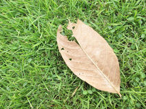 Green grass and dry leaves on ground surface texture background Royalty Free Stock Photography