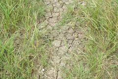 Green grass on dry soil Stock Photos