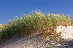 Green grass in the dunes on a background of blue sky Royalty Free Stock Image