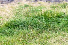 Green grass on Dyrholaey peninsula in Iceland. Travel to Iceland - green grass on Dyrholaey peninsula, near Vik I Myrdal village on Atlantic South Coast in Katla royalty free stock photos