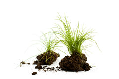 Green grass with earth Royalty Free Stock Photos