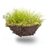 Green grass with earth Stock Photo