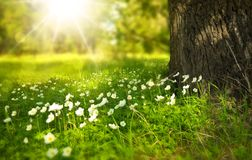 Green, Grass, Ecosystem, Flower Stock Images