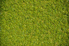 Green grass with empty area for text background. Nature background Royalty Free Stock Images