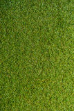 Green grass with empty area for text background. Nature background Royalty Free Stock Image