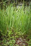 Green grass in environmental Stock Photo