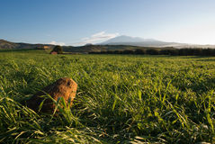 Green Grass And Etna Farmland, Closeup. A stone in green grass on background volcano Etna and clear sky,   Italy Stock Images