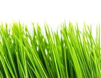 green grass fake Stock Photo