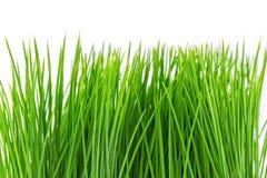 green grass fake Stock Image