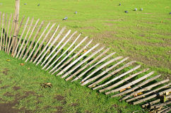 Green grass and fallen fence Stock Photo