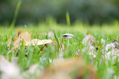 Green grass with fallen leaves in autumn Royalty Free Stock Photo