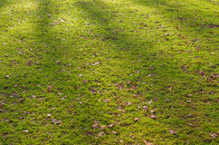 Green grass with fallen leaves Royalty Free Stock Photos