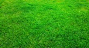Green grass. Fantastically beautiful green green grass Royalty Free Stock Photography