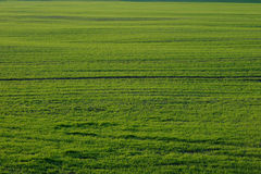 Green grass field. Green lush grass field in a countryside Stock Photography