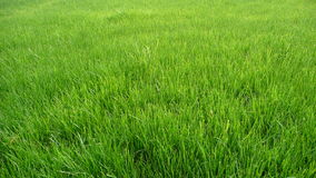 Free Green Grass Field Stock Photo - 14088110