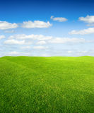 Green grass field Royalty Free Stock Image
