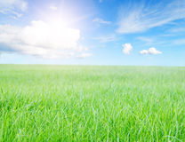 Green grass field Stock Photo