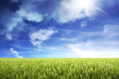 Green grass field Royalty Free Stock Images