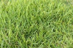 Green grass field. Background of green grass field texture Royalty Free Stock Photos