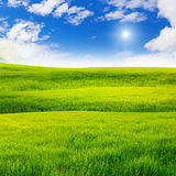 Green grass field Stock Photography