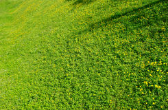 Green grass field Stock Image