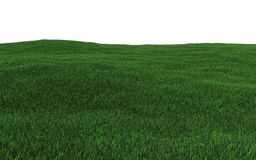 Green grass field. 3d render Royalty Free Stock Images