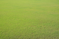 Green grass field Stock Images