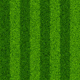 Green grass field. Seamless vector illustration Stock Photography