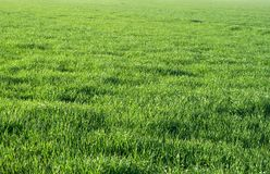 Green grass field. Shot on a sunny day Stock Photos
