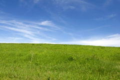 Green grass field. And sky background Stock Photo
