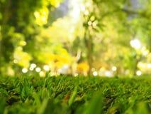 Green grass. At grass field Stock Photos