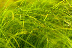 Green grass. On the field Stock Photo