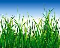 Green grass field. This is an illustration of a grass field Stock Photo