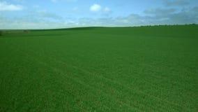 Green grass field. Aerial footage Green grass field stock video